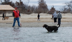 Don't tell the dogs at Greenwich Point Beach that the water temp is 37F