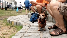 1:42 p.m. Returning to our boats, we met a furry art connoisseur