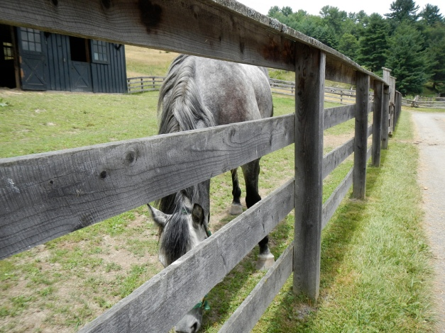 A horse of exactly the same color as the fence
