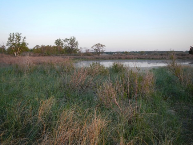Marsh on Shea Island; town of Norwalk beyond