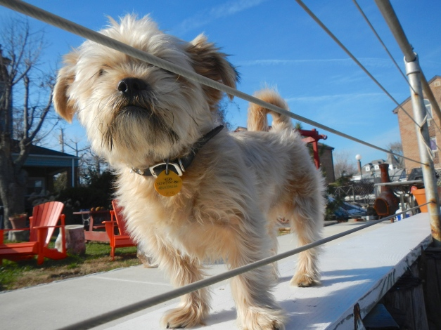 Salty sea dog of City Island
