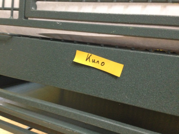 If the tag didn't say so, Kuno certainly would.