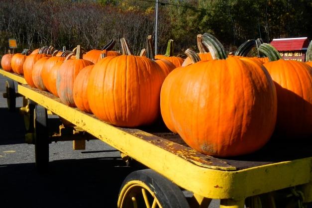 Taconic Orchards, Hudson, NY. October 2013