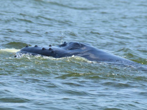 Big gulp 2 geeks 3 knots for Long island sound fishing report